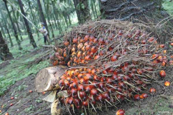 Palm oil may regain market share as India reduces its import duties