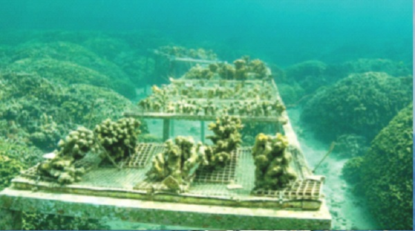 Super corals' give glimmer of hope for world's dying reefs