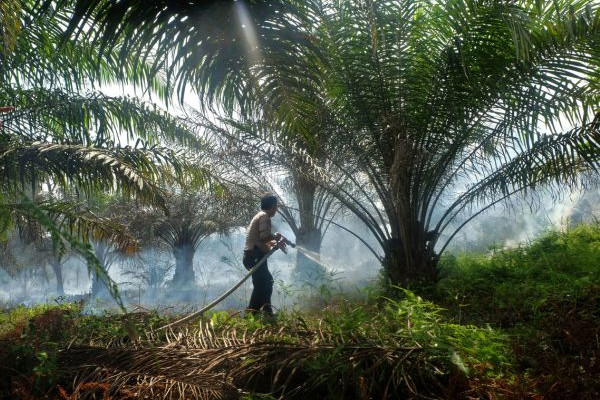 Let us resume our operations, urge palm oil groups | Daily Express Online - Sabah's Leading News Portal